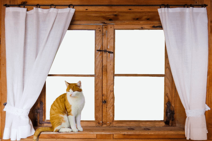 cat sitting in front of a window with curtains